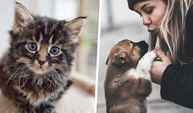 Husdjur, Katt, Hund