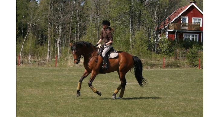 En ultimat lördag innebär oftast hästtävling för Mona.