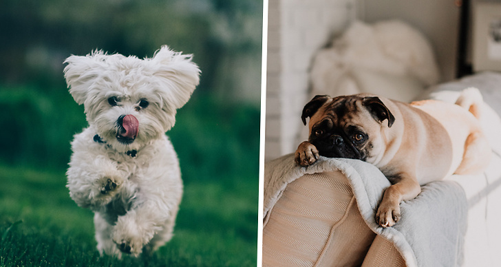 Två söta hundar.