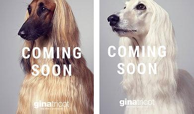 Gina Tricot, Hund, Kampanj, Höst